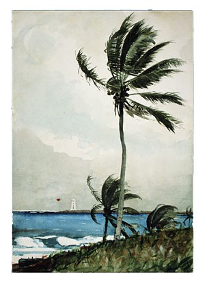 Palm Tree by Winslow Homer