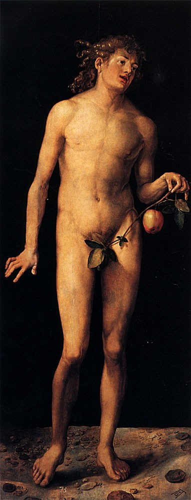 Adam by Albrecht Dürer